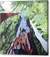 Rim Fire Yosemite  Canvas Print