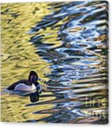 Ring-neck Reflections Canvas Print