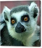 Ring Tailed Lemur-2 Canvas Print