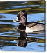 Rings Around Ring-necked Duck Canvas Print