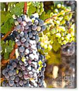 Ripe Grapes Canvas Print