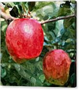 Ripe Red Apples On Tree Canvas Print