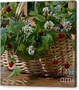 Wild Strawberries And White Clover Canvas Print