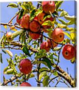 Ripening In The Sun Canvas Print