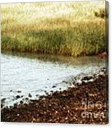 Rippled Water Rippled Reeds Canvas Print