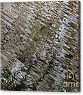 Ripples In The Swamp Canvas Print