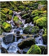 Rippling Rainforest Canvas Print