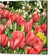 Rising Spring Canvas Print