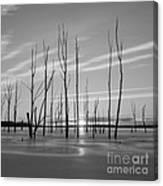 Rising Through The Sticks Canvas Print