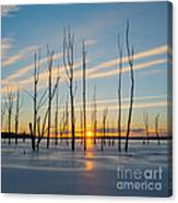 Rising Throught The Sticks Canvas Print