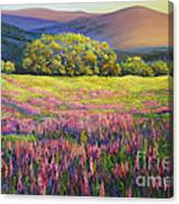 River Bank Lupines In California Canvas Print