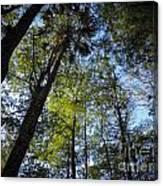 River Bend Park 3 Canvas Print