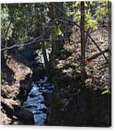 River Beneath The Trees Canvas Print