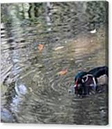 River Duck Canvas Print