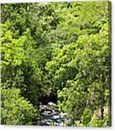 River Glimpses Canvas Print