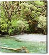 River In Rainforest Wilderness Of Fiordland Np Nz Canvas Print