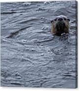 River Otter   #0695 Canvas Print