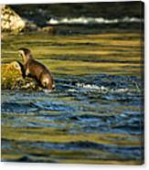 River Otter On A Rock Canvas Print