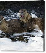 River Otters   #1030 Canvas Print