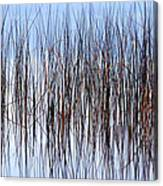 River Reeds Canvas Print