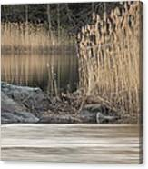 River Rock And Reeds Canvas Print