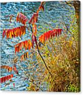 River Sumac Canvas Print