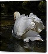 River Swan Canvas Print