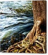 River Through Woods Canvas Print