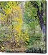 Riverbank Colors Canvas Print