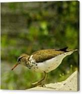 Riverside Bird Canvas Print