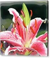 Rk Pink Tiger Lily 2 Canvas Print