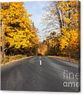 Road In Autumn Forest Canvas Print