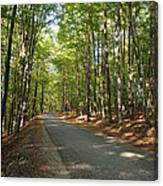 Road In Forest  Canvas Print