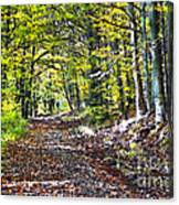 Road In The Forest Canvas Print