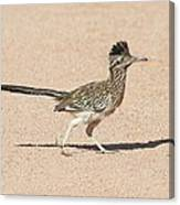 Road Runner On The Road Canvas Print