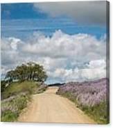 Road Through Lupine Canvas Print