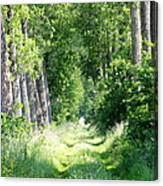 Road To Bruges Canvas Print