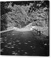 Road To Hana Canvas Print