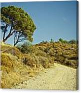 Road With Olive Trees Canvas Print
