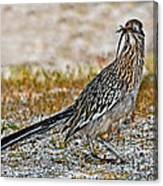 Roadrunner With Lizard Canvas Print