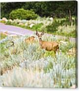 Roadside Buck Canvas Print