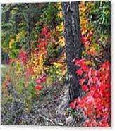 Roadside Fall Colors Canvas Print