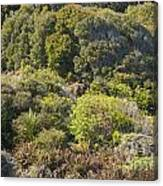 Roadside Forest Scenery Canvas Print