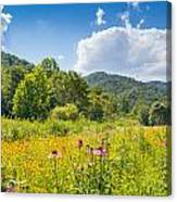 Roan Mountain State Park Canvas Print