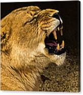 Roar Of A Lioness Canvas Print