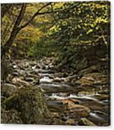 Roaring Branch Brook Canvas Print