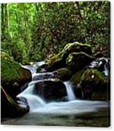 Roaring Fork Waters Canvas Print