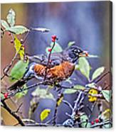 Robin And Berries Canvas Print