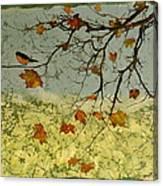 Robin In Maple Canvas Print