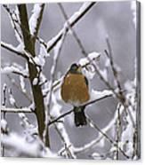 Robin In Snow Canvas Print